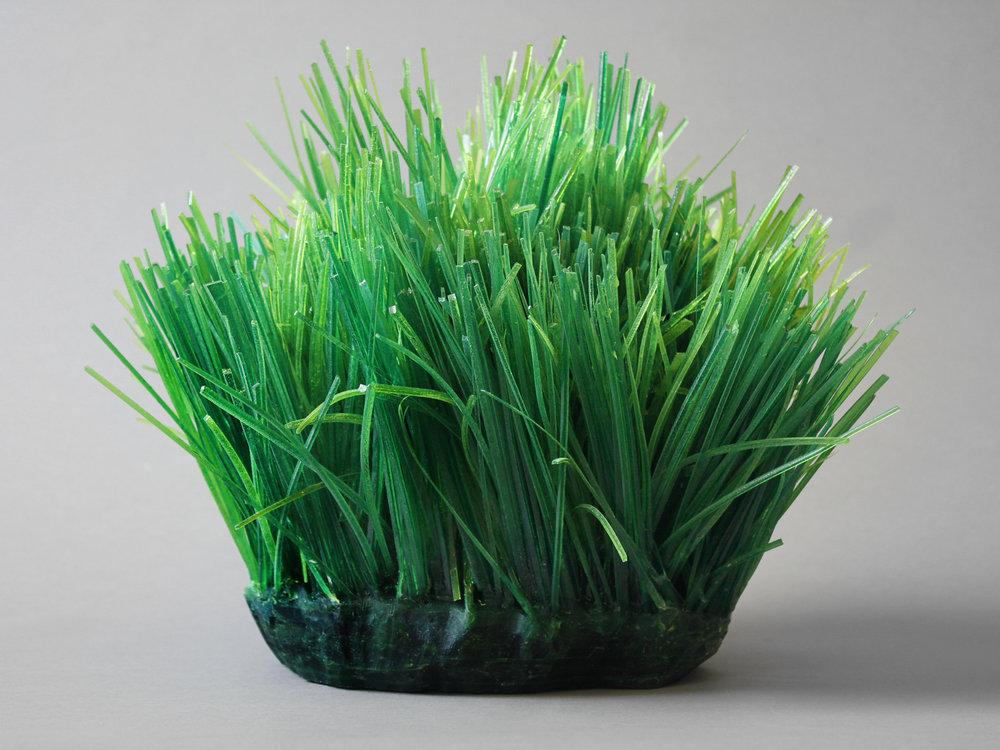 Grassy Spot