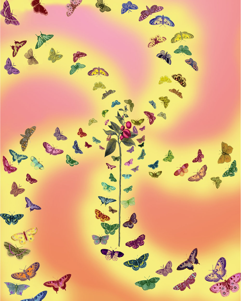 33_Butterfly Frenzy copy.jpg