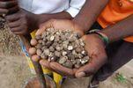 mongongo nuts pounding_preview.jpeg