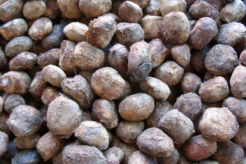 Marula-nuts.jpg