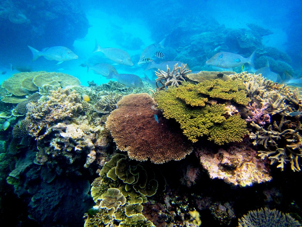 Lady Elliot Reef Bec Spindler Photo.jpg
