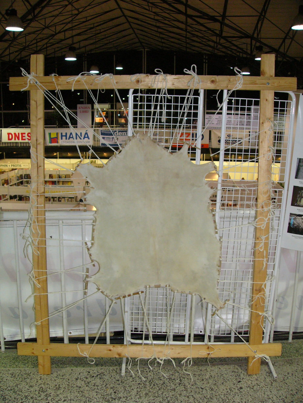 Parchment being prepared from a stretched goatskin