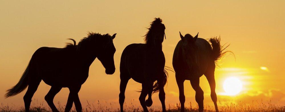 HorseSong