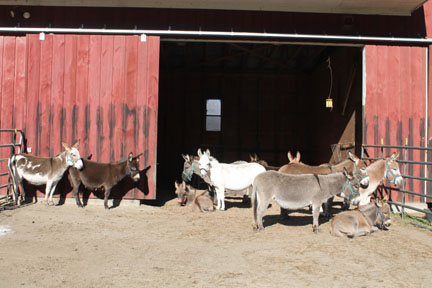 GENERAL DONKEY PICUTURE MARCH 23 2014.jpg