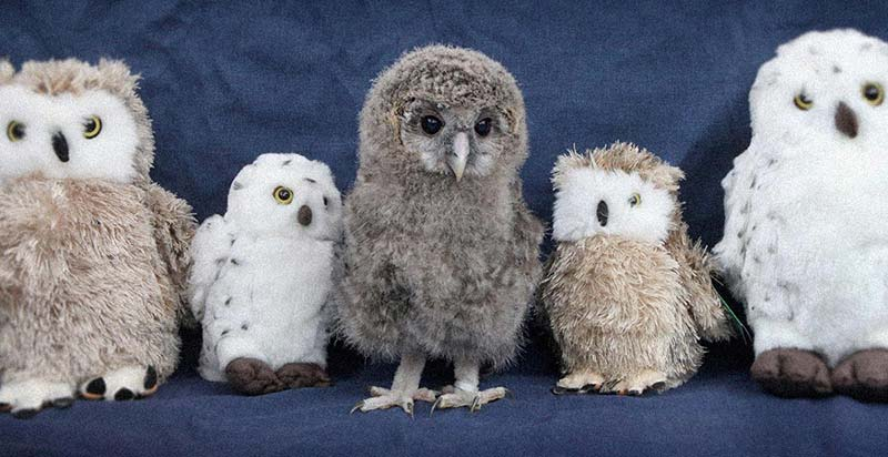 OwlToys.jpg