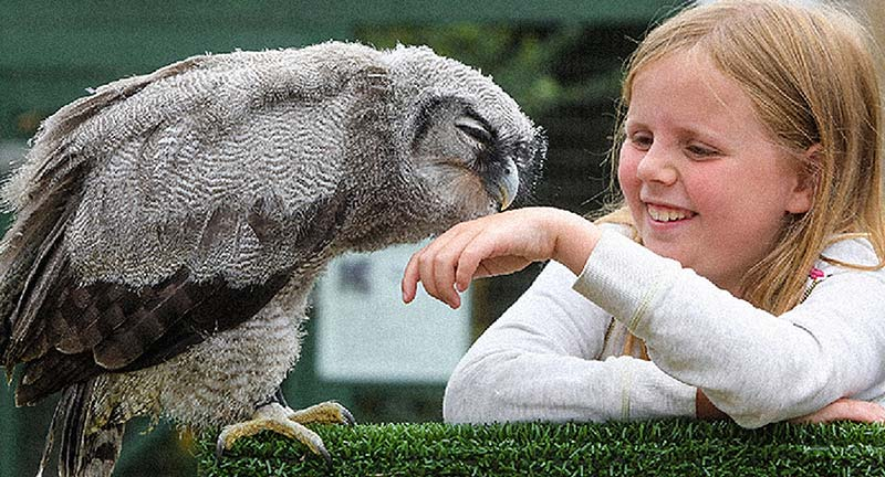 - Explore the themed areas of the Scottish Owl Centre to meet owls from all over the world. You never knew they could be so big, so small or so beautiful.Discover their habits and habitats in the hands-on Owl School, have a hoot on Shortie's Chute and get up close in the awesome Flying Displays. A family day out to remember!