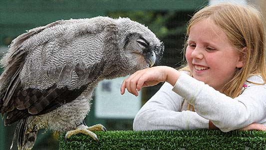 OWL ENCOUNTERS - • Handle and fly owls in indoor arena.• Personal owl tuition.• Full access to the Centre.£65 for 1 hour; £45 for half an hour; £11 per accompanying non-participant.Gift Vouchers available. Booking essential.