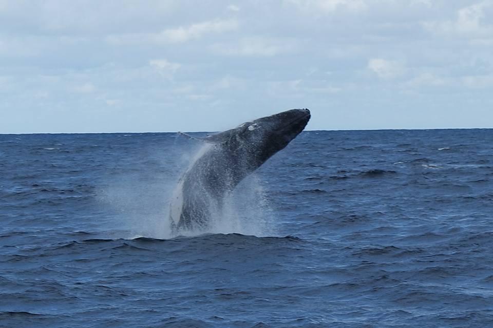 WhaleWatching.jpg