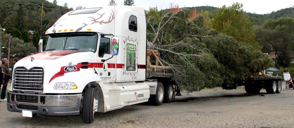 Royal Trucking con el árbol de Navidad del Capitolio de los Estados Unidos