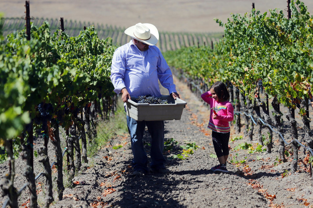 Latino Winemakers Rise in California, Through the Ranks - NEW YORK TIMES September 9, 2013