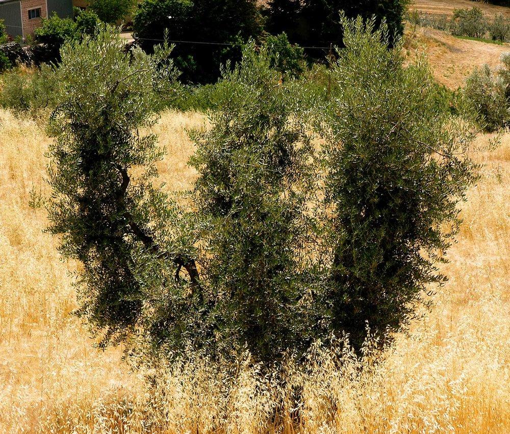 ron-miriello-grafico-Radicondoli-casa-illuminata-siena--Miriello-tuscany-italy-officina-la-pergola-12.jpg