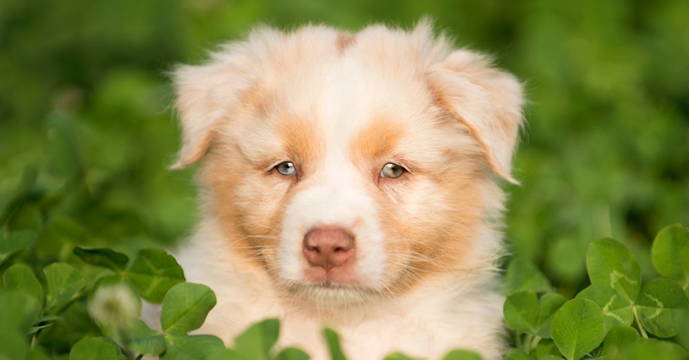 puppy4.png