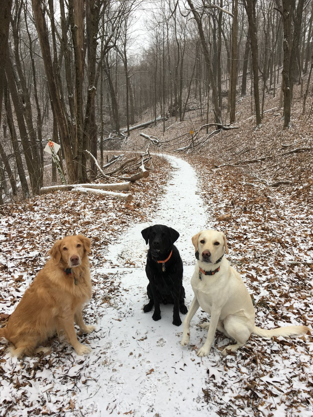 Wisconsin State Park Pass - We spend 50% of our life eating and 50% walking or hiking with the dogs. A Wisconsin State Park pass is only $28 and it's the perfect gift for anyone who likes to get outdoors or has a dog.