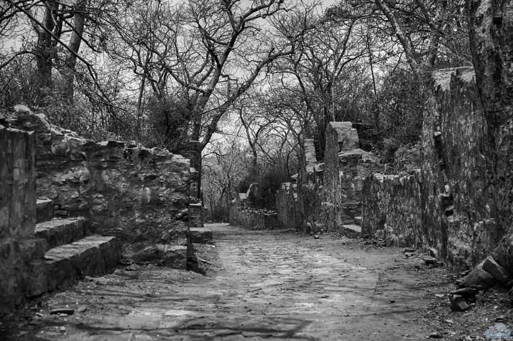 old-colony-lane-ranthambore-fort.jpg