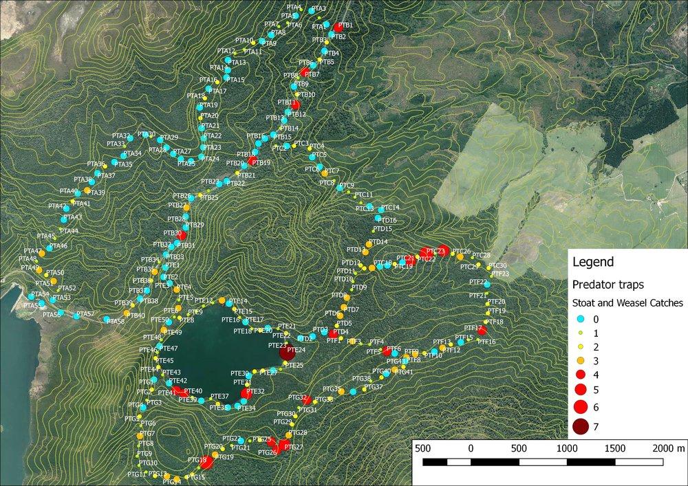 Rotopounamu mustelid catch heat map_2013_18.jpeg