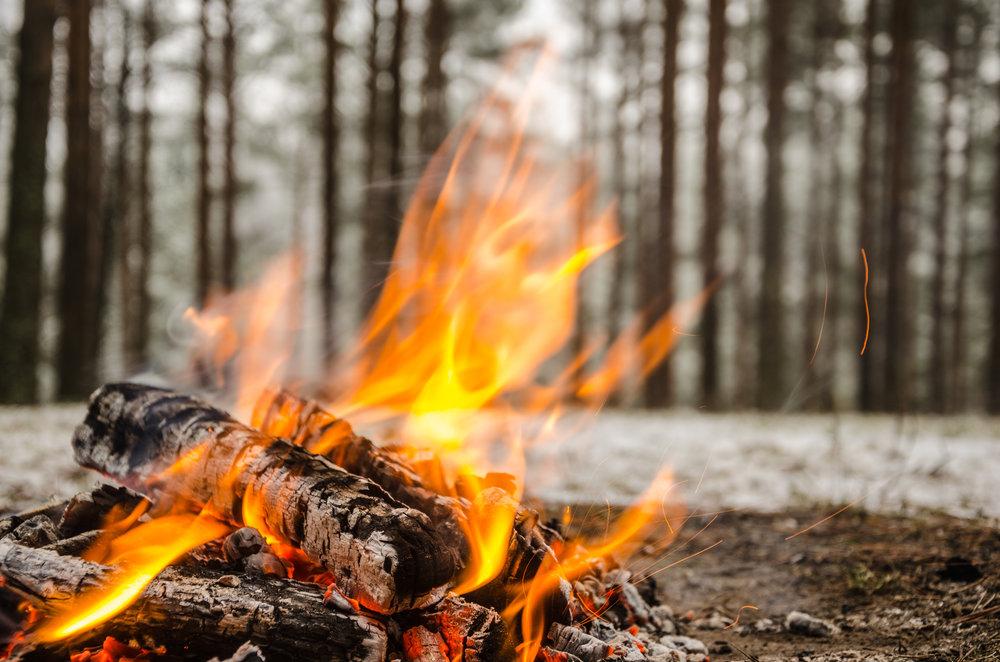 Wild campfire