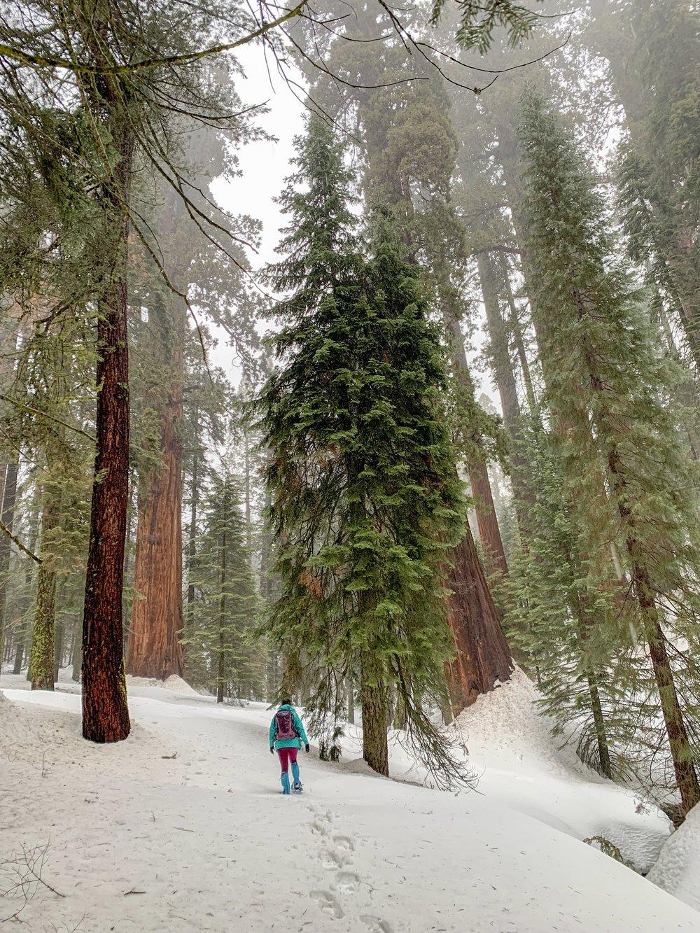snowshoeing sequoia national park.JPG