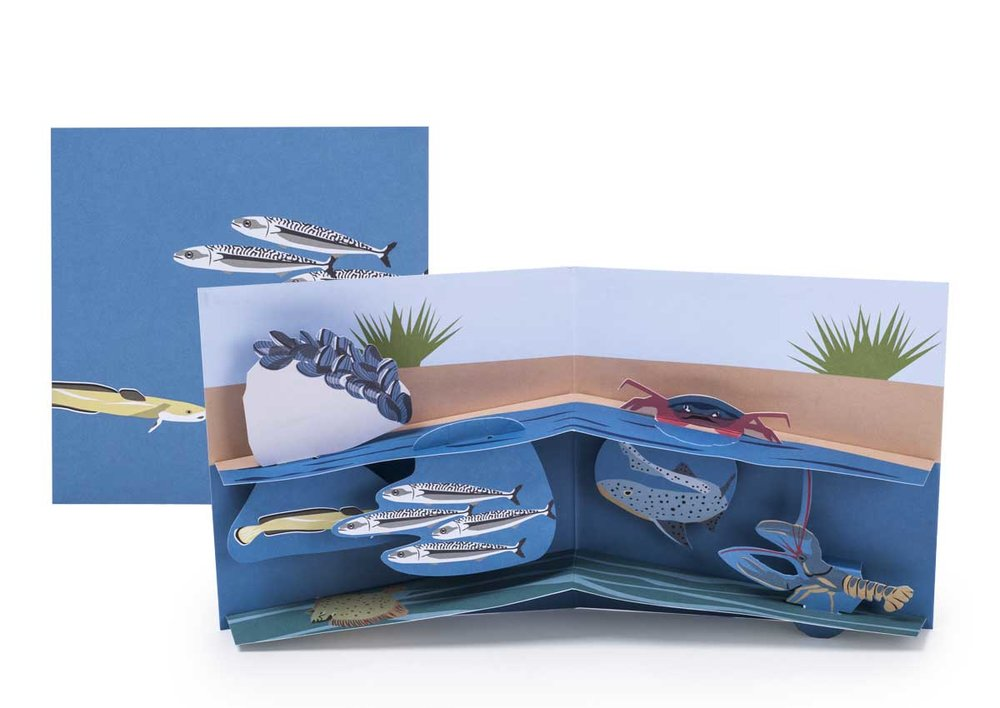 Pop-up-card_2toTango_SeaCreatures_Shoreline_Biederstaedt_1200x850px.jpg