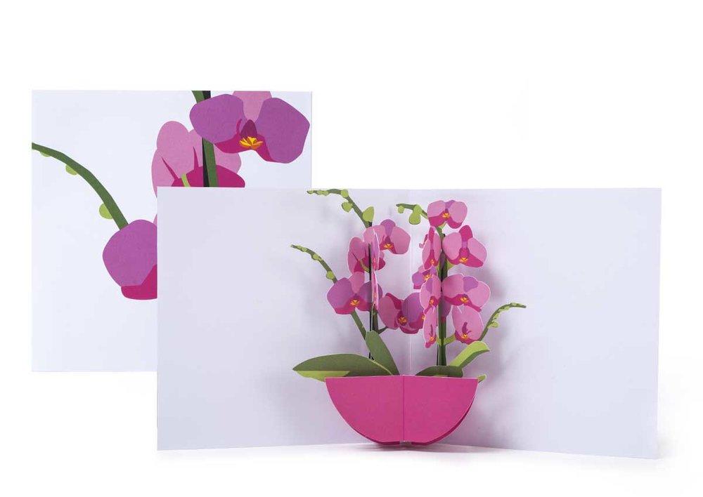 Pop-up-card_2toTango_Flowers_Orchids_Biederstaedt_1200x850px.jpg