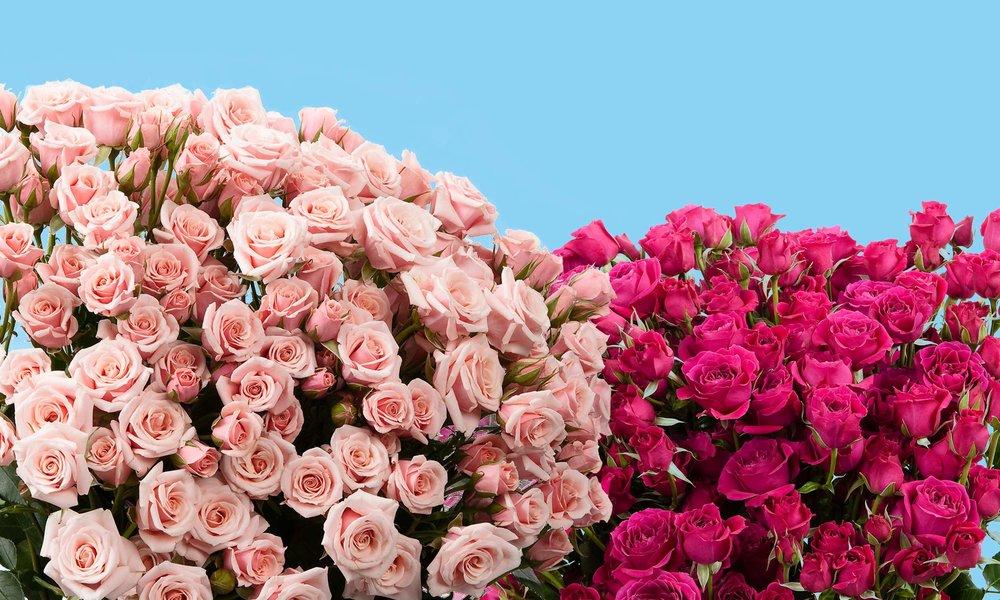 Spray Roses.jpg