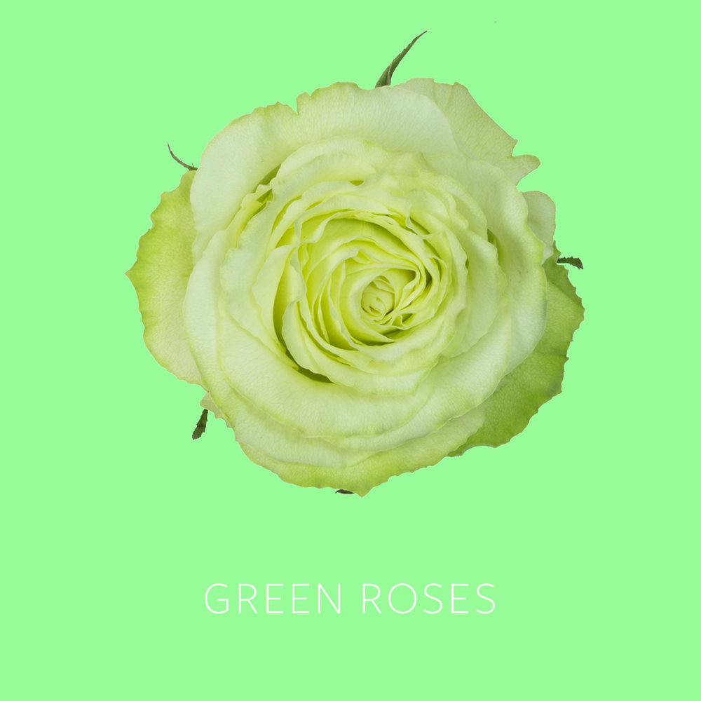 Green Roses.jpg
