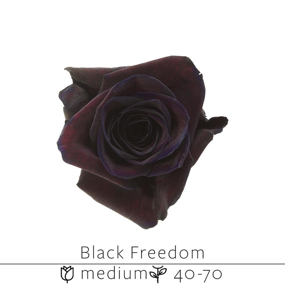 Black Freedom.jpg