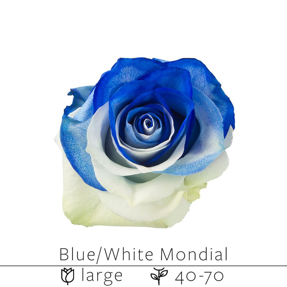 Blue White Mondial.jpg