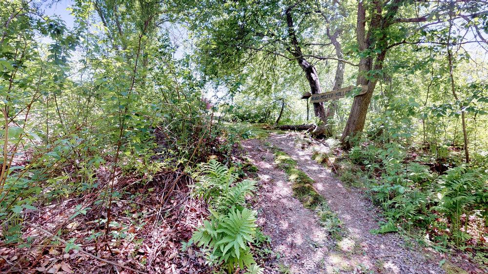 Wood Pecker Hollow.jpg