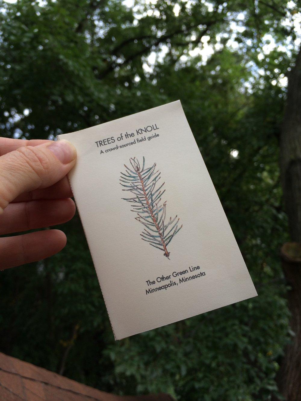 TreesOfTheKnoll.JPG