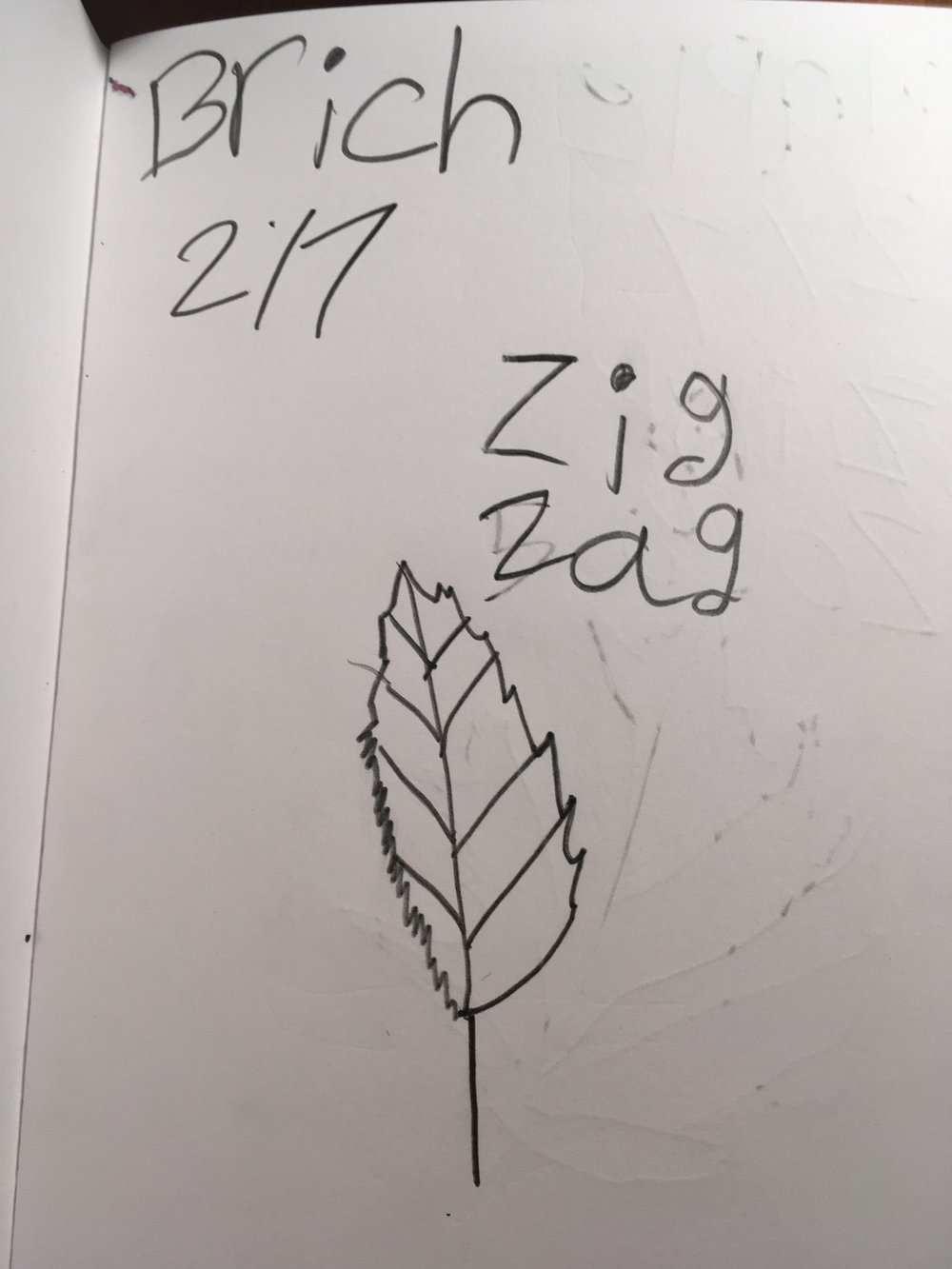 2nd Grader's Naturalist Notebook