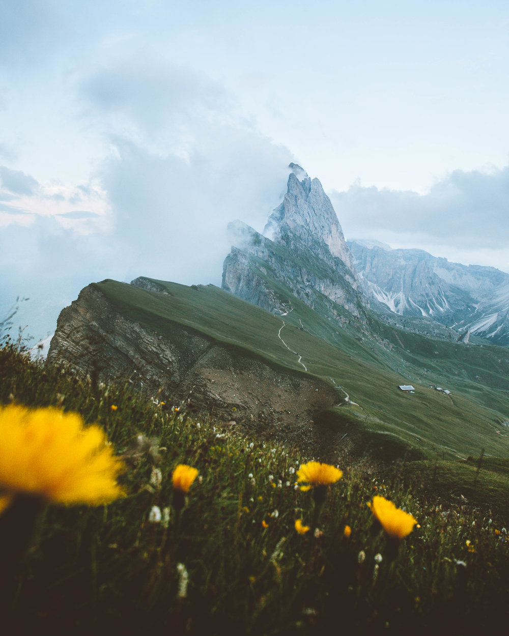 Seceda Yellow Flowers.jpg