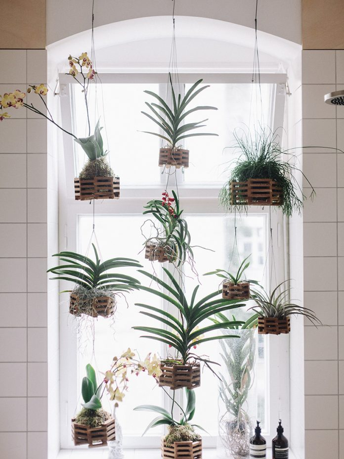 Plants: like children minus the dread of impending climate collapse. They even clean the air!  That's  magic.  via cereal magazine