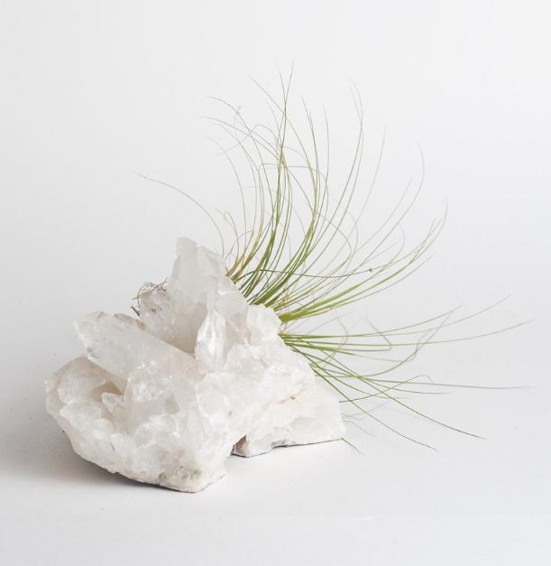Quartz Crystal with Air Plant , shopsucculents | $70