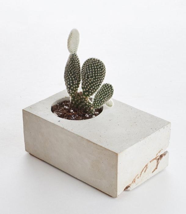 Cactus in concrete pot , shopsucculents | $26