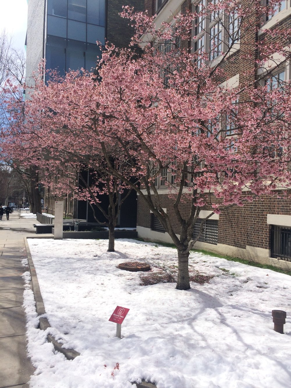 Penn campus.jpg