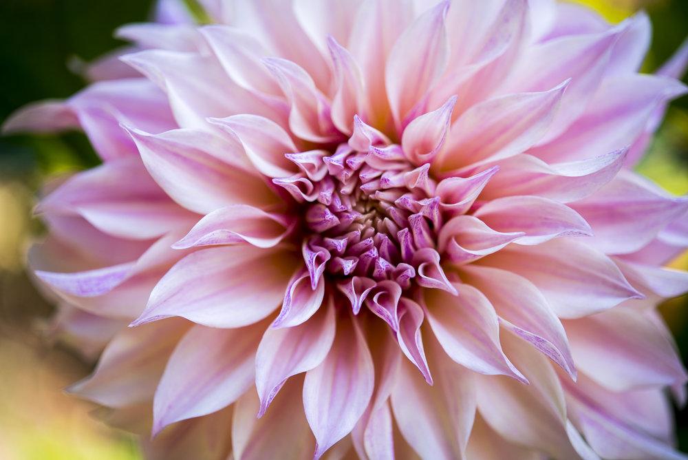 RootsofJoy_Garden_081718_dsc_2926.JPG