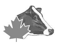 Holstein Canada.png