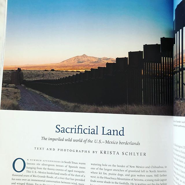 Such a gorgeous and sad essay in the last issue of Orion, about the impact the border wall has on wildlife migration patterns.