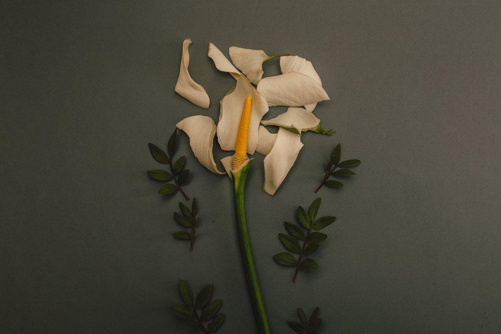 bloom-blossom-flora-922926.jpg