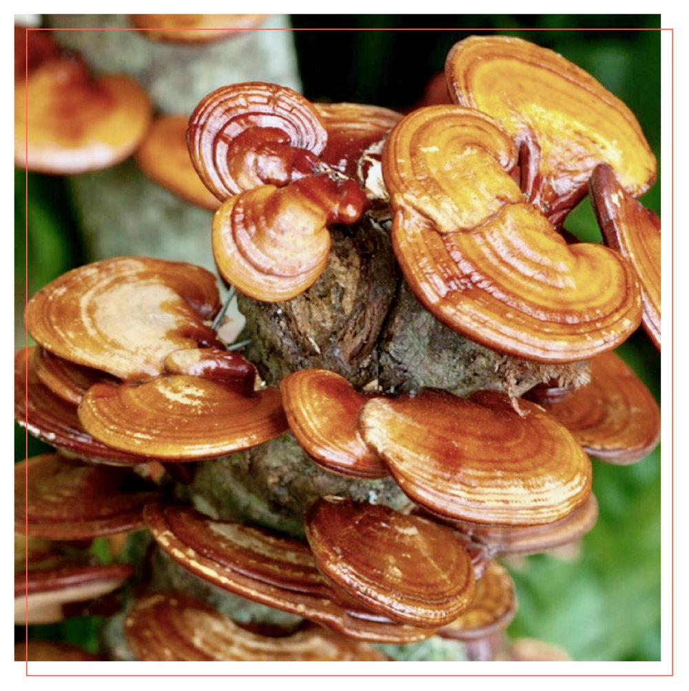 DailyBlend_PhotoFormatting_Mushroom-11.jpg
