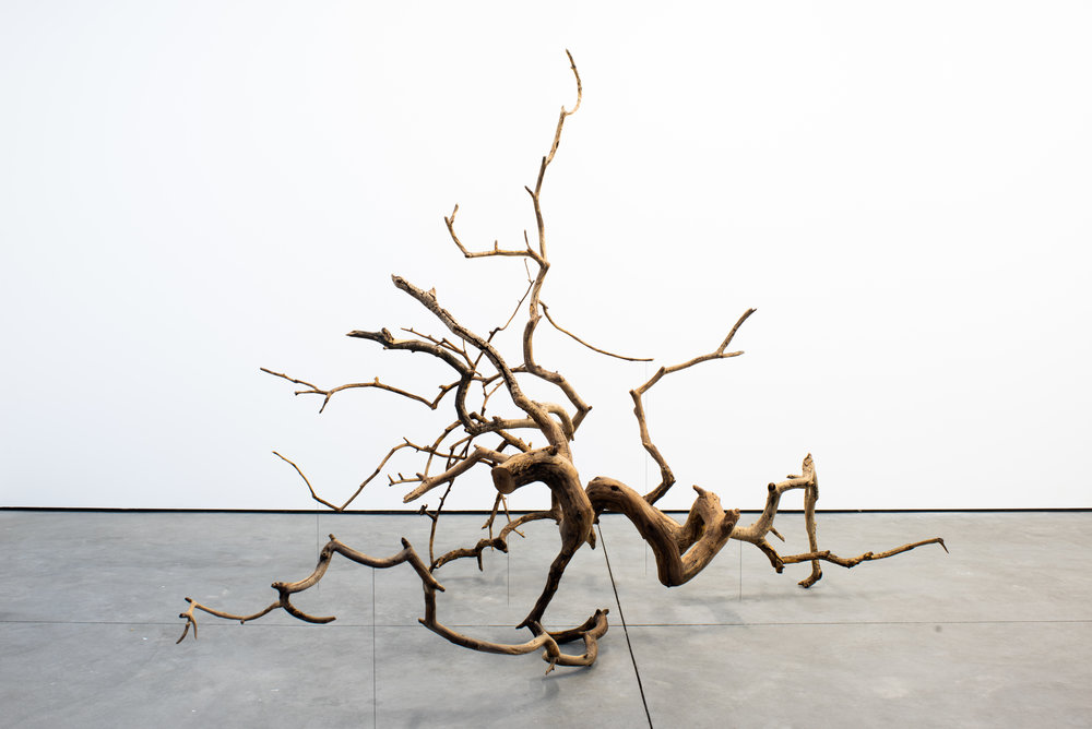 Stephen Lichty,  Branch , 2018, Weeping mulberry branch, paraloid b-72, silver, 72 x 60 x 77 inches, Courtesy of the artist and Foxy Production, New York