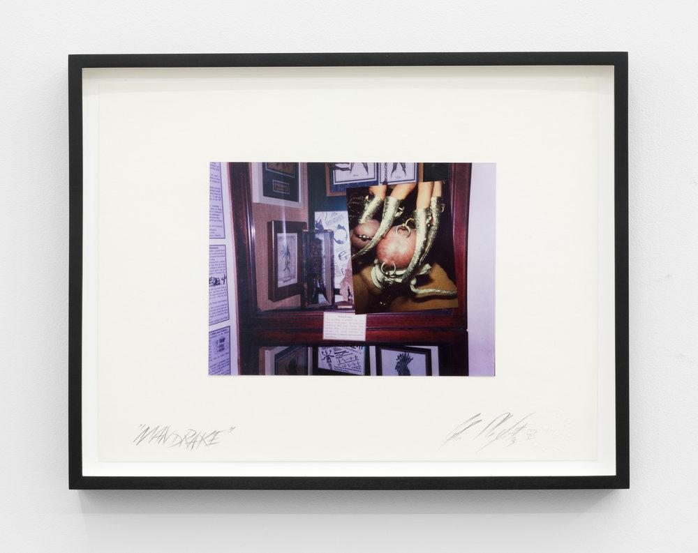 Genesis BREYER P-ORRIDGE,  Mandrake , undated, Mixed media, 10.25 x 14 in