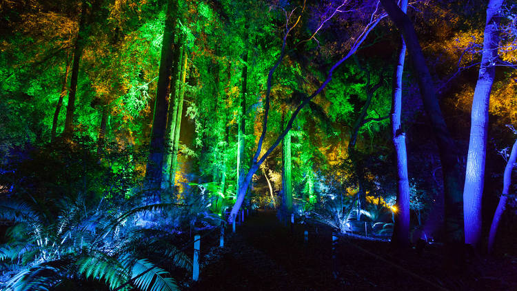 Descanso Garden Forest of Lights - Perfect for the whole family!