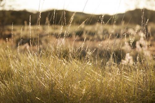 spinifex-bush-land-in-outback-australia-austockphoto-000011005.jpg
