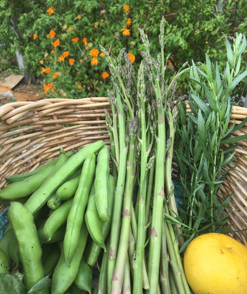 Broad beans, asparagus, tarragon and a lemon in the basket for lunch prep.