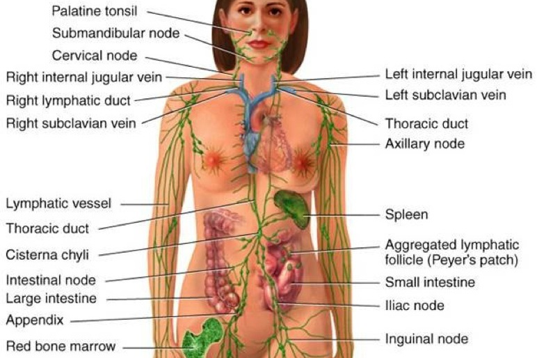 LYMPHATIC DRAINAGE -