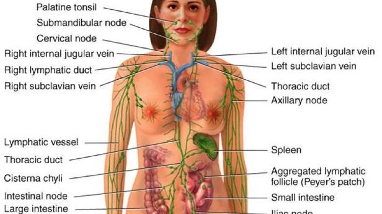 LYMPHATIC DRAINAGE (MLD) -