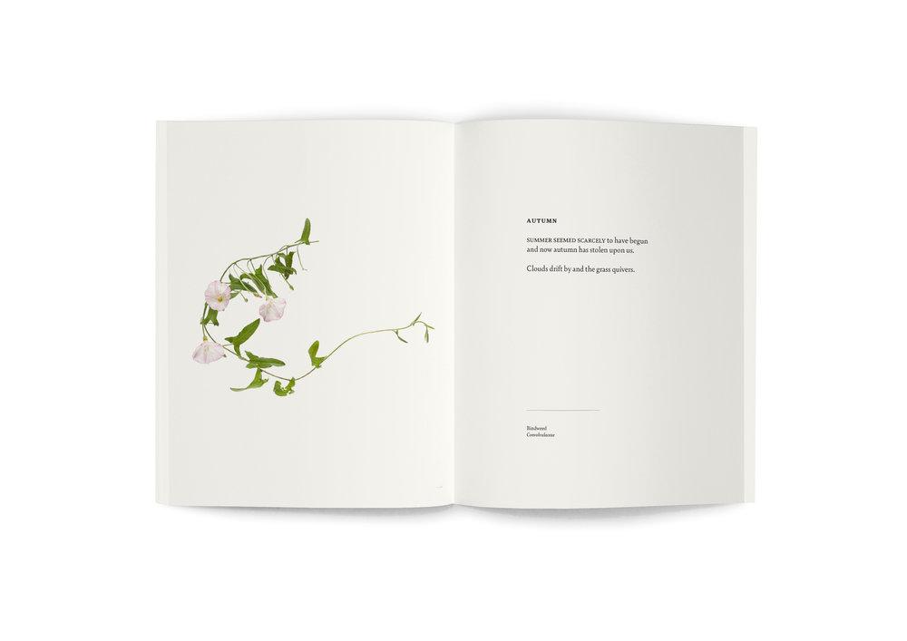 TRE_book_spread_Bindweed.jpg