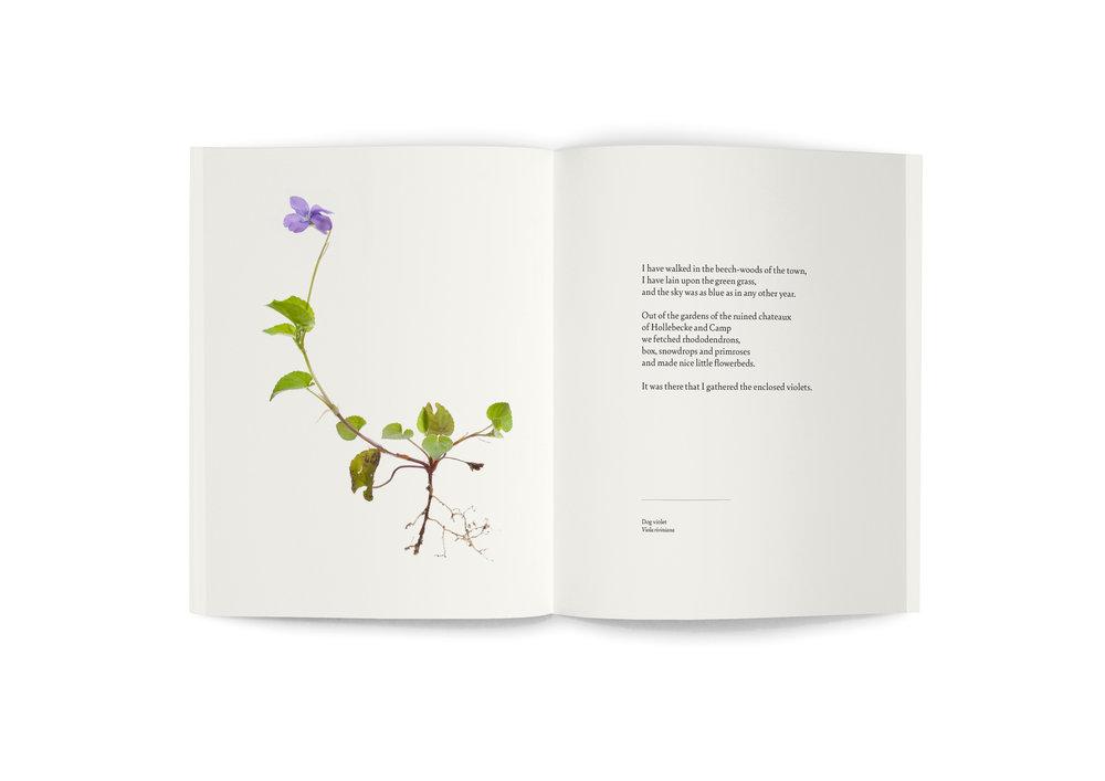TRE_book_spread_Violet.jpg