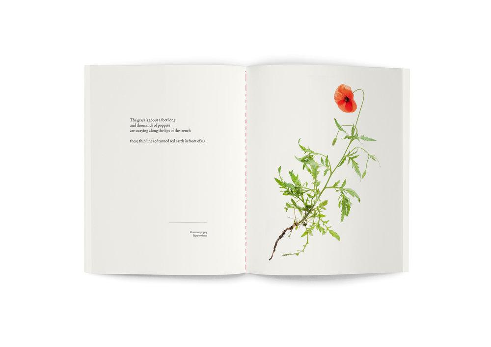 TRE_book_spread_Poppy.jpg